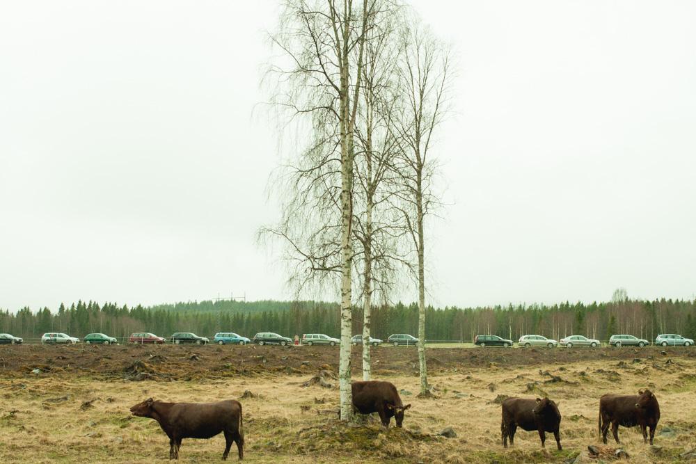 Betessläpp i Västra Spöland